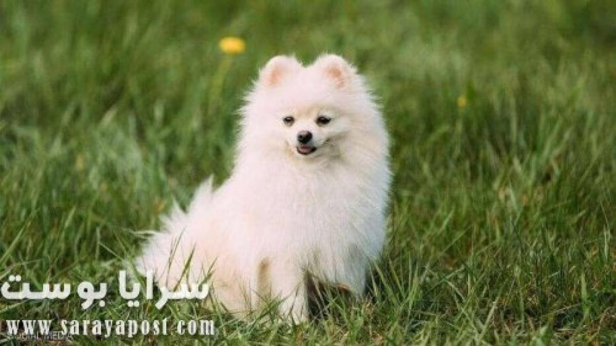 نفوق كلب أصيب بكورونا كشف دور البشر في نقل الفيروس للحيوانات