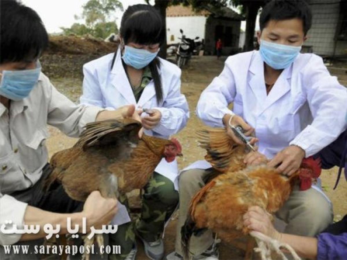 خبر سئ من العراق.. انتشار حالات إصابة بفيروس إنفلونزا الطيور