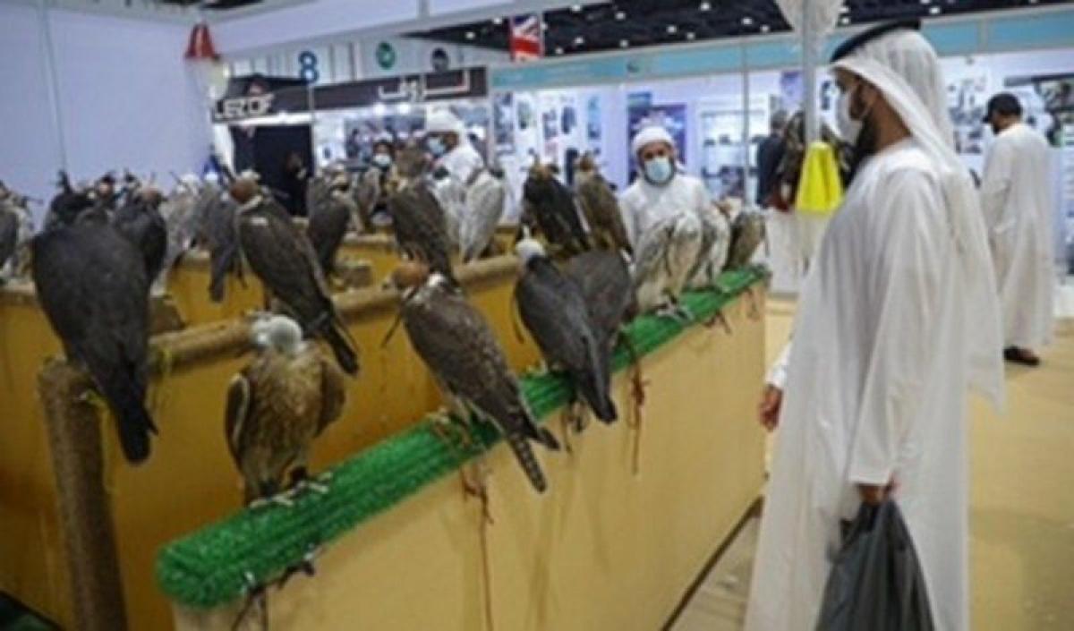 الفروسية والصقارة العربية تبهر ضيوف 44 دولة بمعرض أبوظبي الدولي