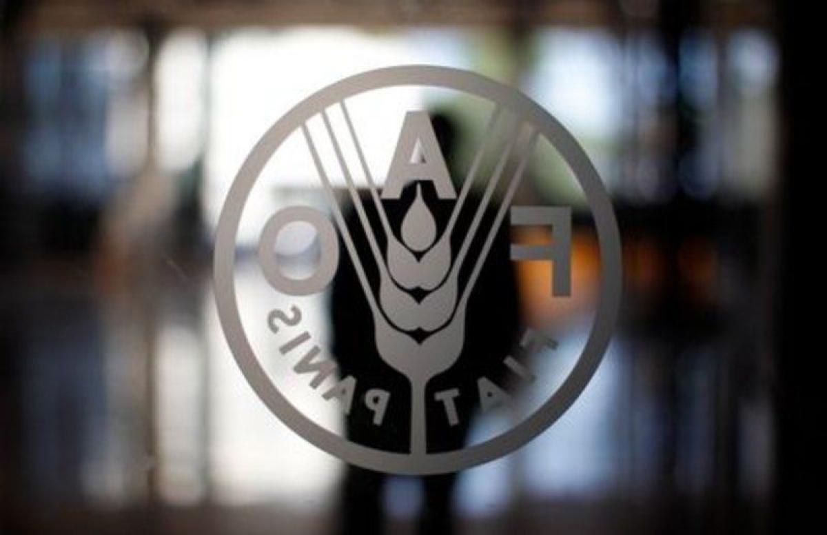 """""""فاو"""": أسعار الغذاء العالمية تسجّل ذروة 10 سنوات"""